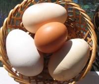 ¿Cómo sustituir los huevos?