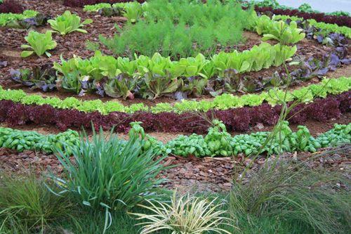Jard n con hierbas arom ticas cocinachic for Jardin de plantas aromaticas