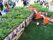 Jardín con hierbas aromáticas