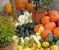 Verduras de estación:que comprar en cada una
