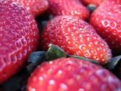 Pastafrola de frutillas