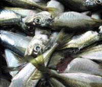 ¿Cómo saber cuándo un pescado es fresco?
