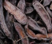¿Qué es la algarroba y para qué sirve?