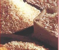 Según el tipo de arroz fueron descubiertos diferentes índices glucémicos
