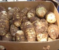 ¿Qué es la Yautía? ¿Cómo se come la Yautía o Malanga?