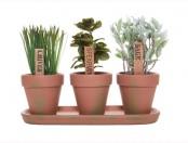 Hierbas aromáticas: Cultivo de hierbas aromáticas en huerta casera