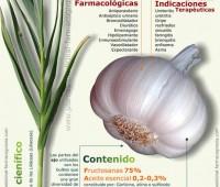 Infografía sobre las propiedades del ajo
