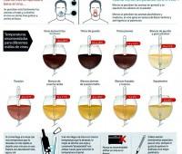 Infografía de a que temperatura consumir el vino