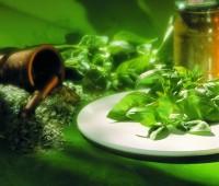 Cómo preservar albahaca fresca