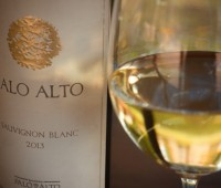 Palo Alto Sauvignon Blanc, una cepa con prestigio