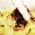 Riquísimo Pollo con puré de papas al azafrán
