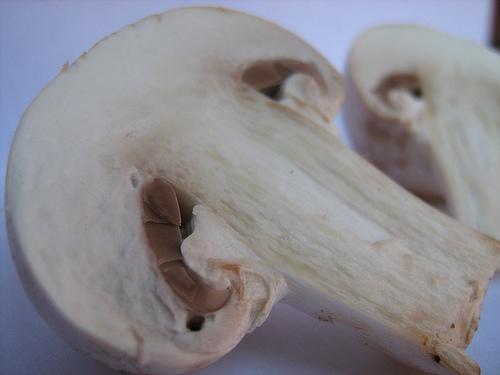 champignones