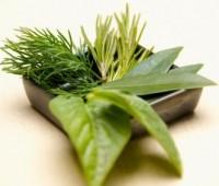 Las hierbas aromáticas con qué comidas quedan bien