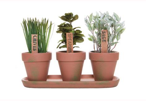 Hierbas arom ticas cultivo de hierbas arom ticas en - Cultivo de hierbas aromaticas en casa ...