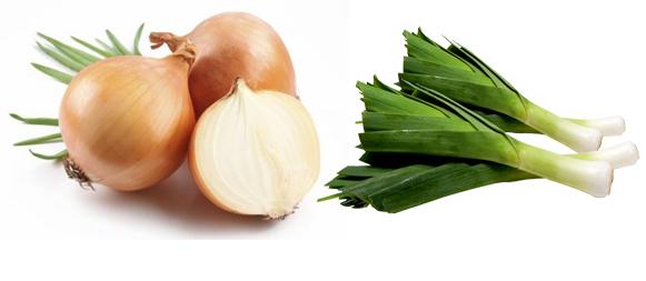 Resultado de imagen de cebolla  Y puerro